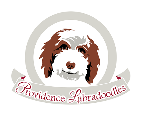 Providence Labradoodles
