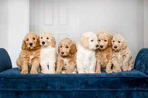 Group Photo of Layla's Pups