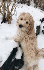 Snow Day for Pup